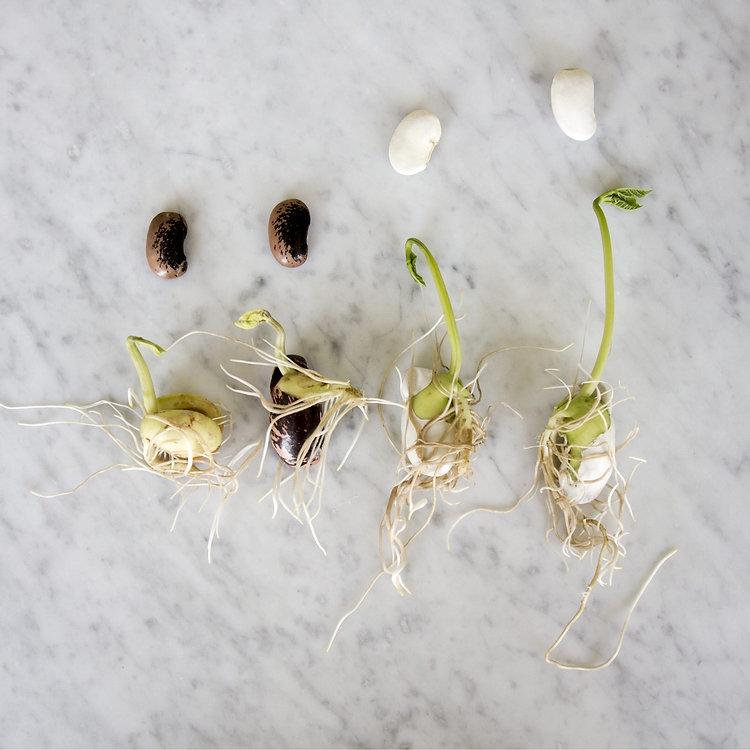 new-seed-mix09.jpg