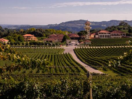 Vinícola Miolo: Vindima e Wine Garden