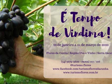 """Evento """"É Tempo de Vindima 2020"""" em Flores da Cunha - RS"""