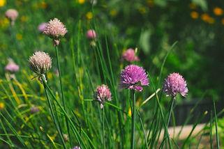 4H Garden (11 of 16).jpg