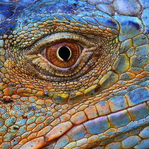 ZenArt Blue Iguana Puzzle -Small