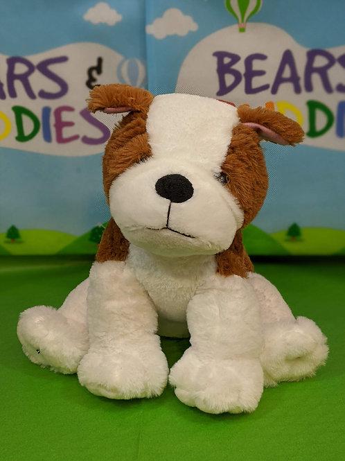Brown & White Puppy