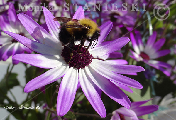 BEE BEAUTIFULL - SIGNED AND FILE INFO -