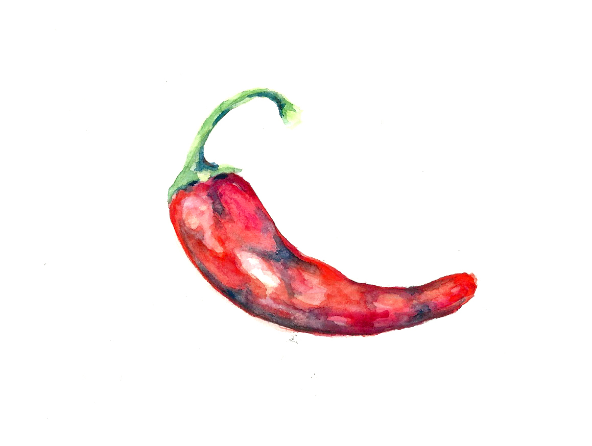 Chilli Pepper illustration