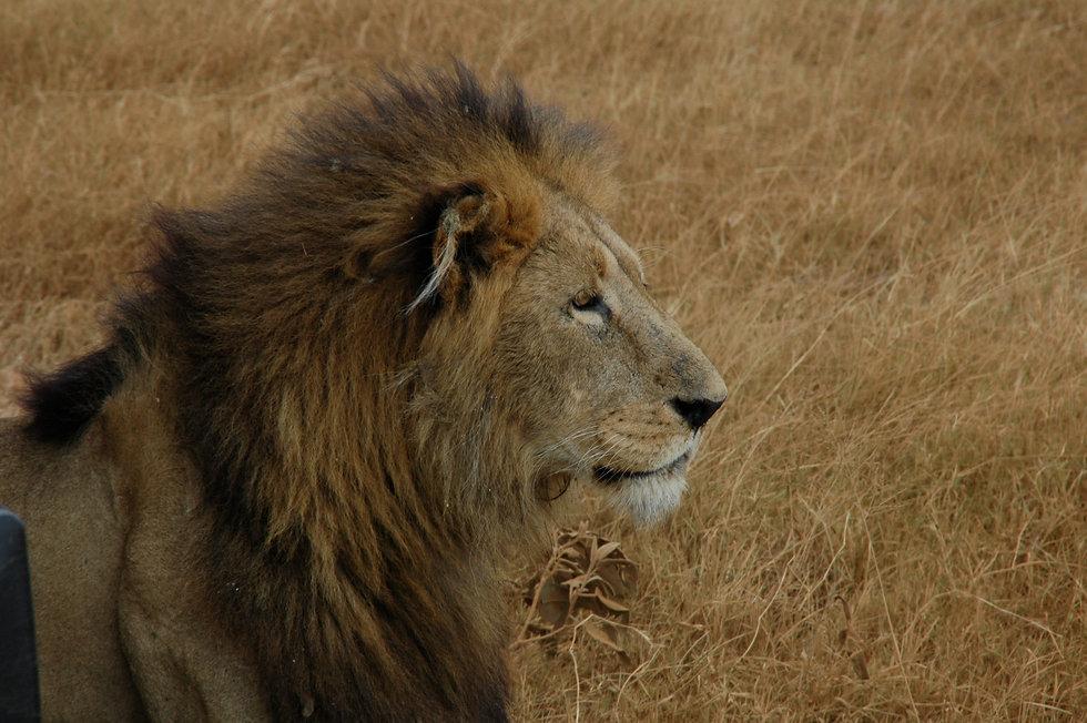 AFRICA JULIOL 2009 (2) 650.jpg