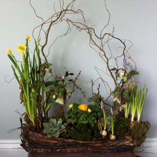 Spring design with bark