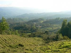 Honduras SWP Decaf Organic