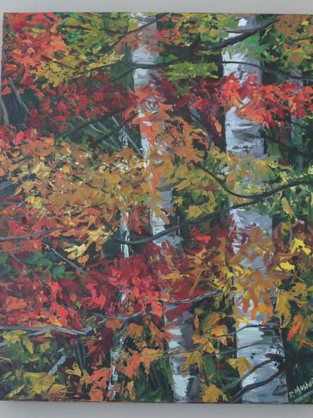 Maple Birch