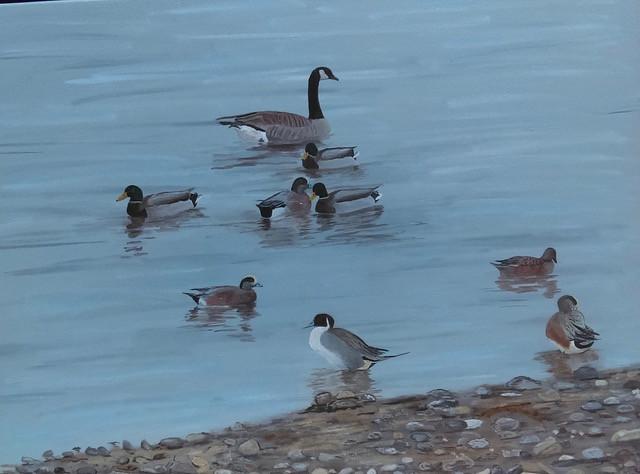 €˜Mallard Wigeon Pintail Goose