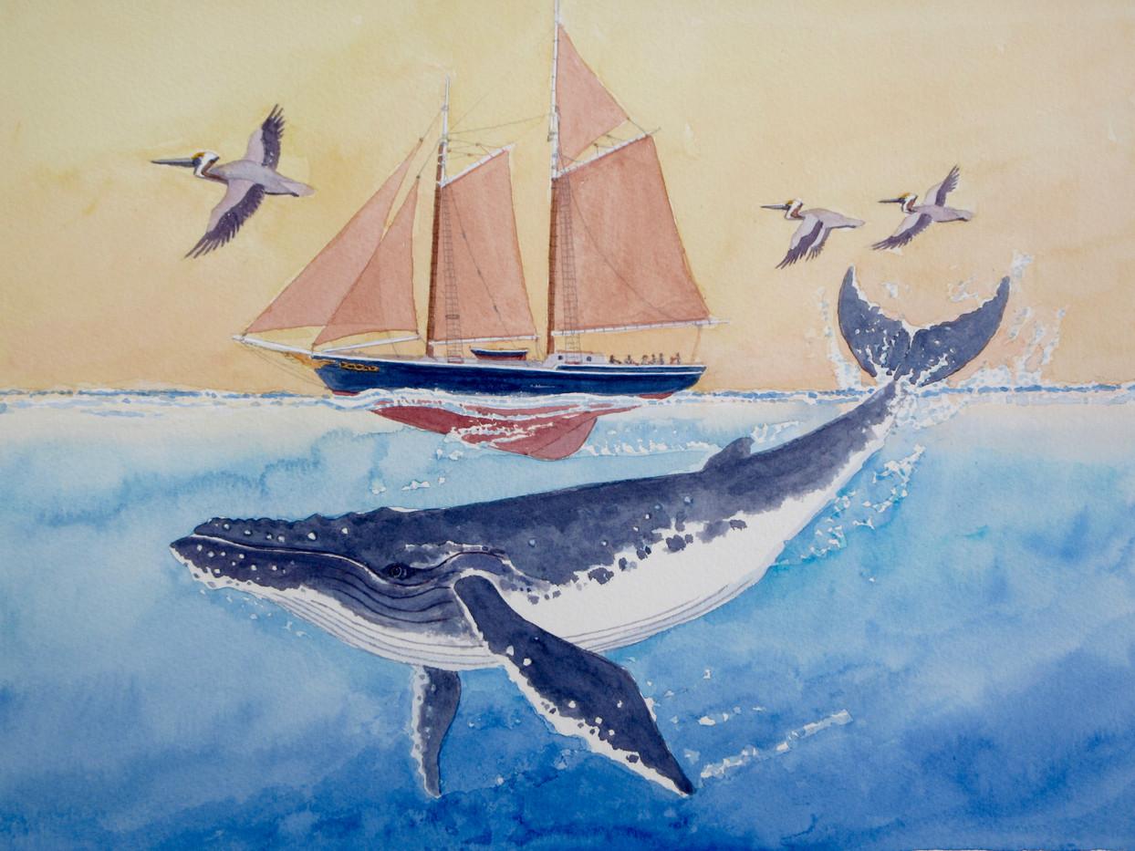 Humpback Sail WC 11x15