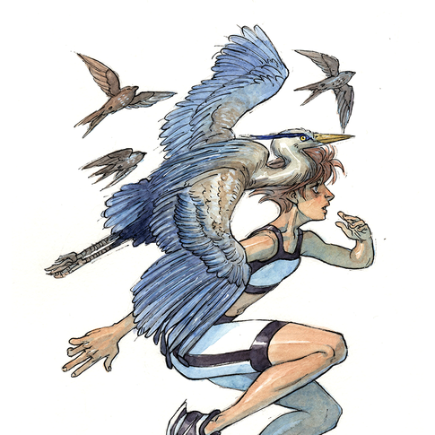 It's a bird race!