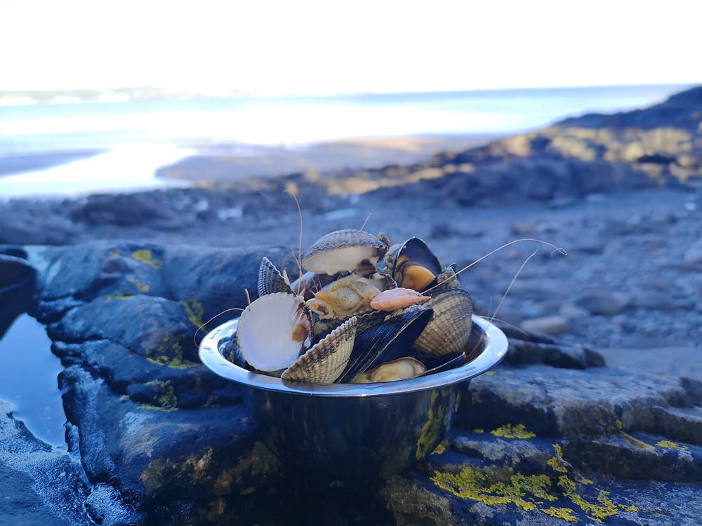 Top of the Woods eco glamping camping holidays Pembrokeshire Wales UK - Wild Coastal Foraging Weekends