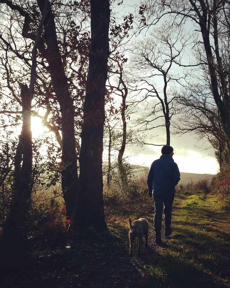Top of the Woods Camping & Glamping Holiday – Pembrokeshire – Wales - UK - Woodland Walk