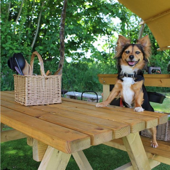 Woof Weekend is back! We are so exited to share this fun camping and glamping weekend for dogs and dog lovers!