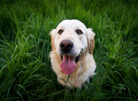 5 Tips For A Happy Camping & Glamping Holiday With Your Dog!