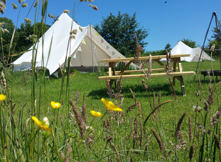Our 6 Tips For Making Your Camping or Glamping Trip As Eco-friendly As Possible!