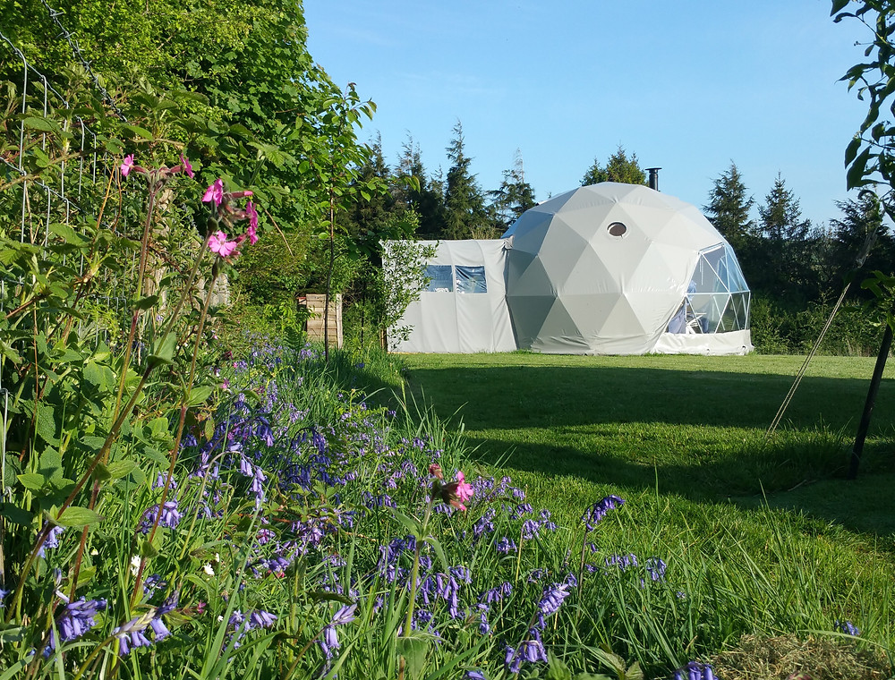 Glamping Nature Dome and wildflowers at Top of the Woods eco holidays Pembrokeshire, Wales UK.
