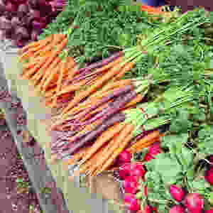 A selection of organic vegetables, carrots, radish, beetroots.