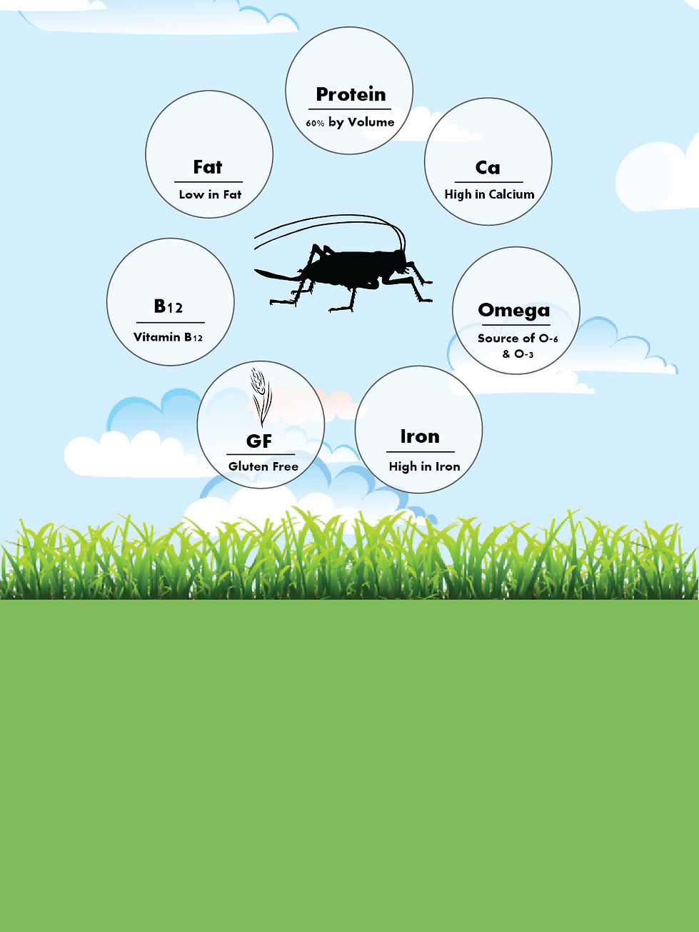 Why Eat Bugs Infographic