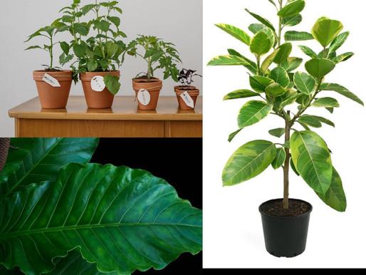 2021 Popular Plant Trends