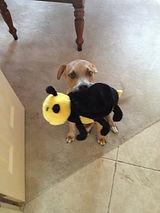 Jodi Henson's dog Bruce