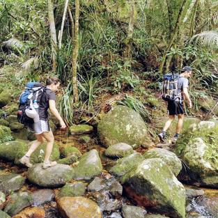 Hiking in the Atlantic Rainforest