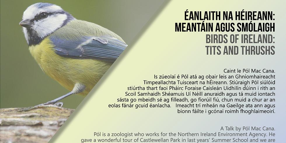 Éanlaith na hÉireann: Meantáin agus Smólaigh/Birds of Ireland: Tits and Thrushs