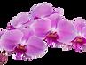 Thai Massage Edgecliff