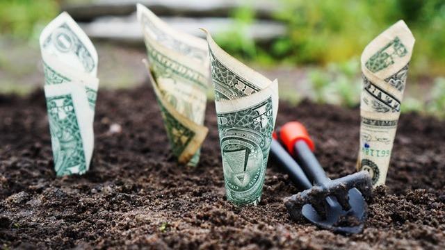 Dollar bills planted in earth