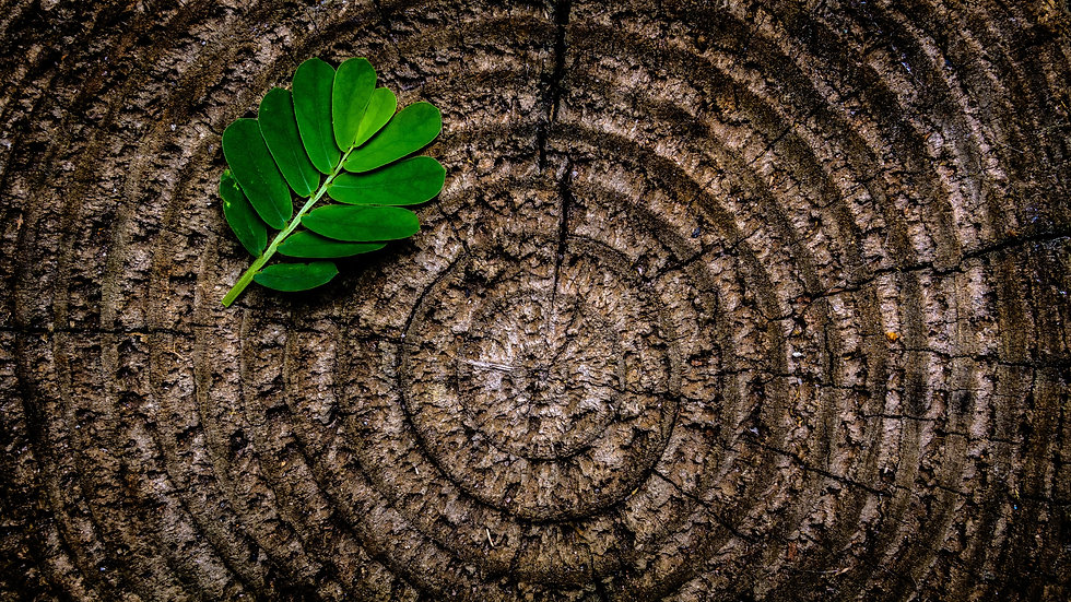 green-leaf-on-brown-wooden-stump-129743.