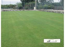 campo finalizado