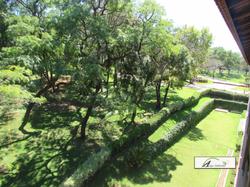 Cerca viva ligustrum - bela emilia