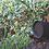Thumbnail: Sonance - Gartensystem PATIO System 4.1