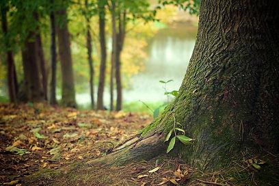 tree-569275_1920_edited_edited.jpg
