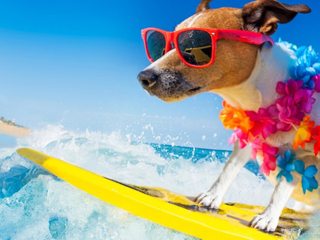 JULIARTE, férias de verão 2021