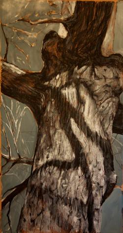 oak in sunlight