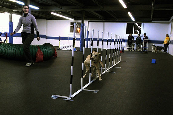 LEARN MORE ABOUT OUR AGILITY PROGRAMS