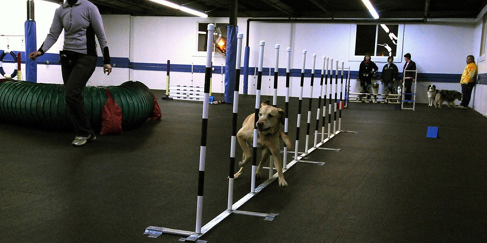 Canine Massage for Agility and Sport - 19th January