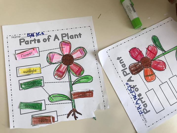 Botanica in classe