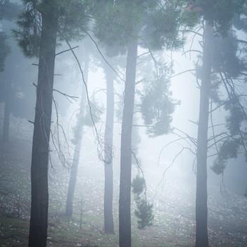 יער מיסטי