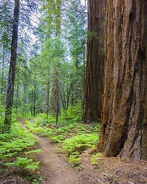 Nelson Trail