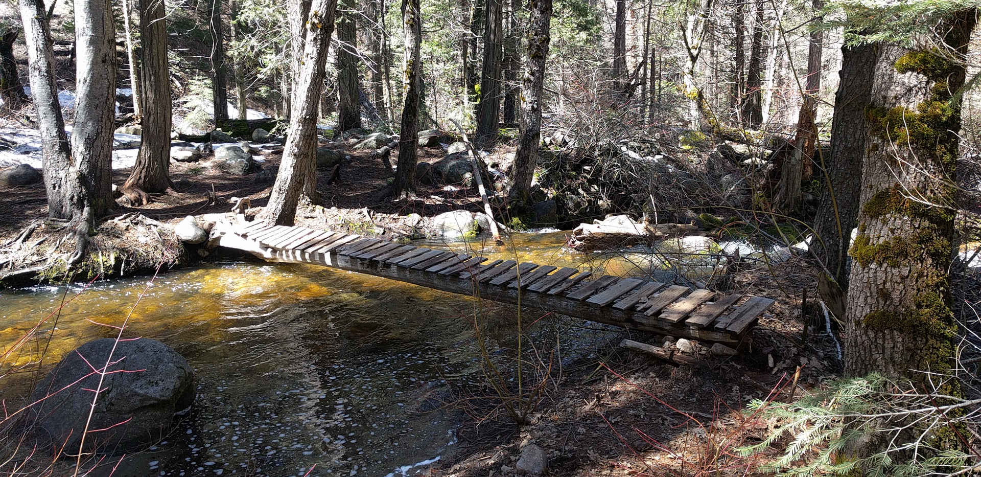 Rustic Bridges on the Nelson Trail