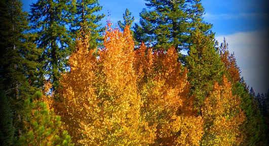Fall Colors at Ponderosa