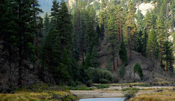 Meadow and Stream in the Golden Trout Wilderness