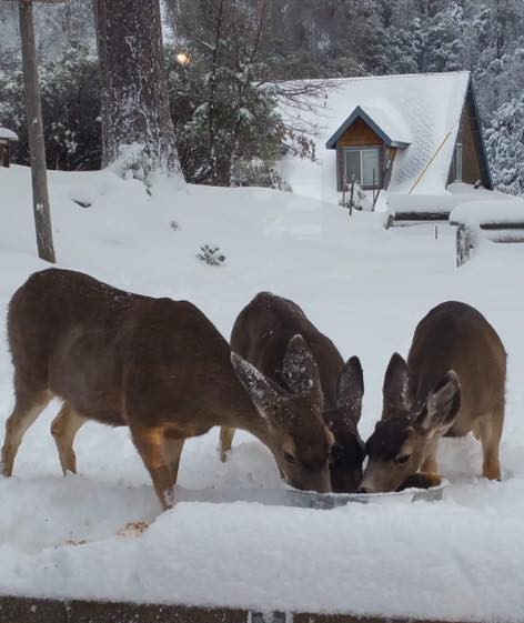 Deer in Snow by the Pierpoint Bar & Grill