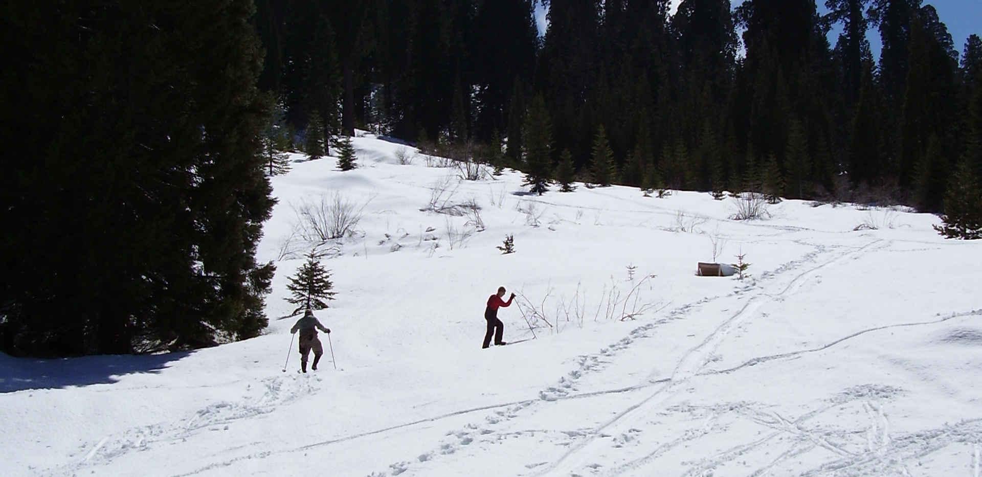 Sequoia Crest Ski Hill