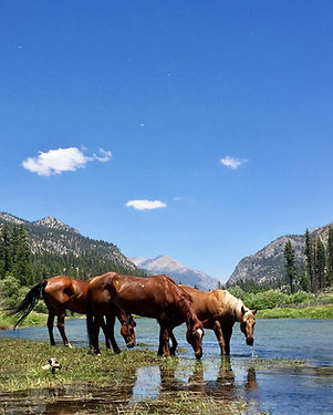 Horses in a Stream in the Golden Trout W
