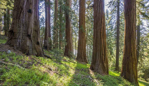 Bear Creek Trail through the McIntyre Grove