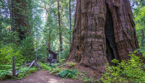 Bear Creek Trail through the Belknap Camp Grove