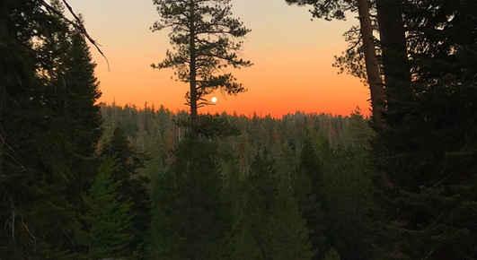 Ponderosa at Sunset